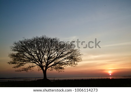 Stock Photo The sun at the edge of the sky shines golden orange on the horizon and reflects on the water surface of the lake. The trees and branches that stand in front of look  black.
