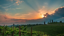 The sun goes down in the vineyards of Friuli-Venezia Giulia, Italy
