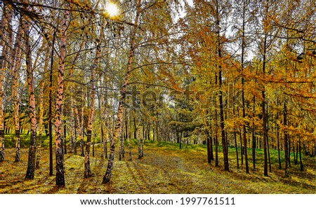 The sun in a cloudy autumn forest. Autumn in forest. Autumn forest scene