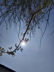 The sun is darning from behind the leaf of tree