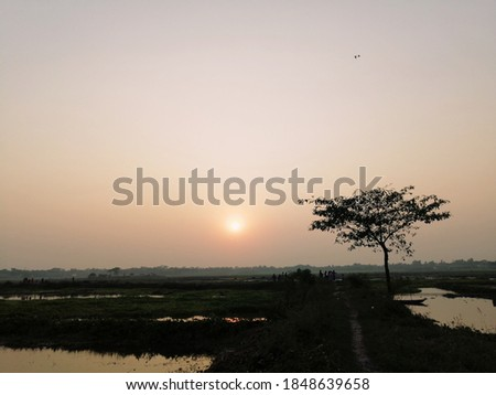 The sun is going down at dysk and a tree Zdjęcia stock ©