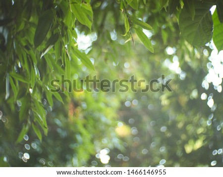 The sun is shining in the morning. Shining on the tree Green leaves in the garden. #1466146955