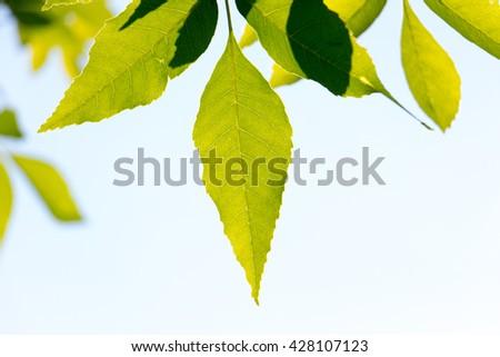 The sun leaves - Shutterstock ID 428107123