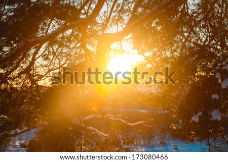 The sun on the horizon breaks through tree branches frosty night;