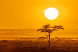 The sun rises over the acacia trees of Amboseli National Park, Kenya. Golden morning light with space for text.