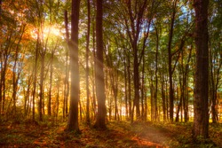 the sun's rays leak through the branches of the autumn forest