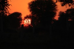 The sun sets in the evening behind silhouette trees in the forest in the evening, india. concept for Evening time, nature's routine, symbol of darkness, waiting for new morning