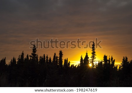 The sun sets in the South Anchorage Wetlands, back-lighting the spruce trees.