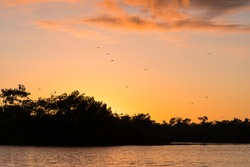 The sun sets over Paurotis Pond in Everglades National Park as birds come flying in to roost for the night.