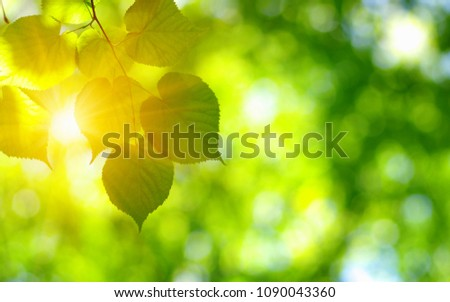 The sun shines in the green leaves. Nature spring background.