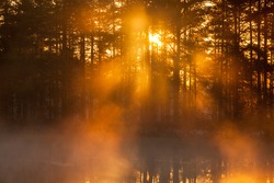 The sun shines through the forest at a misty morning