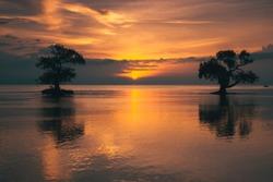The sun shines through the mangrove-trees in Ai Lemak Beach, Sumbawa, Indonesia