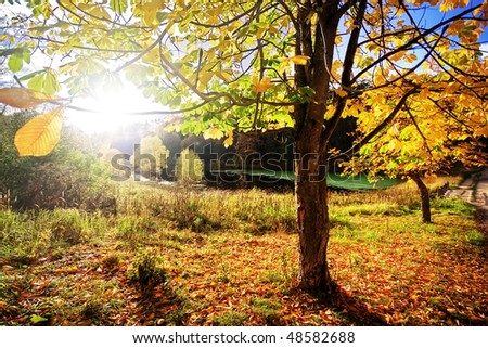 The sun shines through tree foliage on decline. Russia
