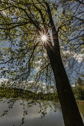 The sun shining through the tree by a lake. Nature wood sunlight backgrounds. Evergreen woodland panoramic view.Branches with leaves silhouette.Sunrays in the woods.Sunny peaceful day outside.