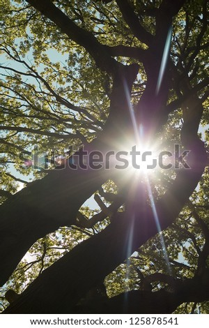 The sunlight shining through a leafy treetop.