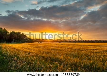 The sunset over wheat field in Germany . #1285860739