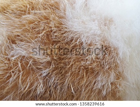 The surface of rabbit fur consists of brown and white. #1358239616