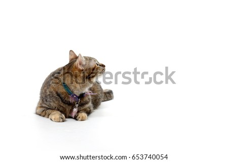 The tabby cat on the white background. #653740054