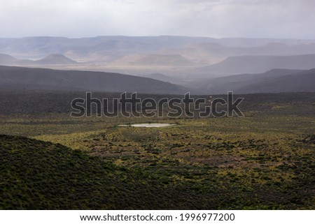 The Tankwa Karoo veld, between the Cederberg and Hantam Mountains, Western Cape, South AFrica, filled with yellow wild flowers during a cold and misty spring day Stockfoto ©