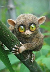 the tarsier is a very peculiar small animal.in fact it is one of the smallest known primates, no larger than an adult men's hand.