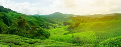 The tea plantations background , on Cameron highland , Malaysia