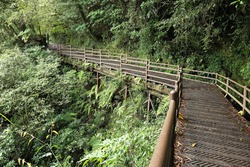 The Tefuye Ancient Trail was originally a hunting path opened by the Tsou indigenous people. It was rebuilt into the Shuishan Line Railway for lumber transportation.wooden bridge