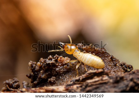 The termite on the ground is searching for food to feed the larvae in the cavity.