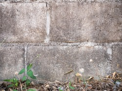 The texture of an unpainted old wall overgrown with ivy. The soil is covered with dry leaves. Moldy wall surface. Stained and moldy concrete blocks.