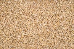 The texture of barley groats - top view and close-up on the grains of barley groats