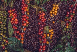 The texture of coffee beans and coffee berries.