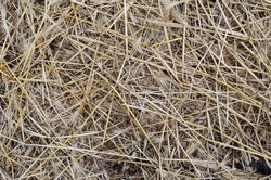 The texture of dry straw. A detailed shot of yellow dry grass lying chaotically. Multitask background. View from above.