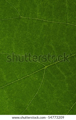 the texture of green leaf
