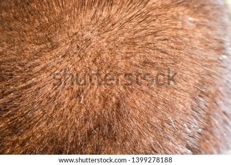 The texture of natural fur European mink. Brown furs. #1399278188