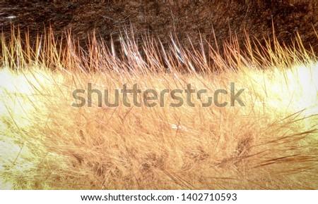 The texture of natural fur European mink. Brown furs. #1402710593