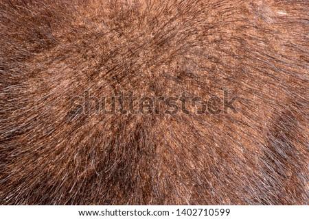 The texture of natural fur European mink. Brown furs. #1402710599