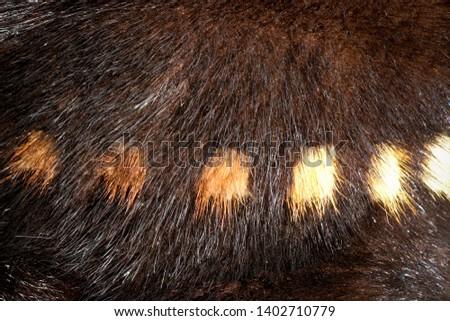 The texture of natural fur European mink. Brown furs. #1402710779