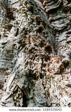 The texture of old wrinkled leathery wood. Tree bark damaged by pests and diseases, water and wind. Plant texture