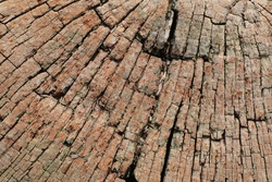 The texture of the bark of the tree in the garden