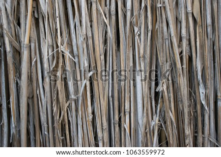 The texture of the dry reeds. Yellow reeds. A fence made of reeds; close-up; texture, background #1063559972
