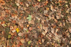 The texture of the ground with autumn leaves