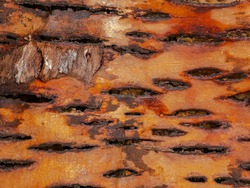 The texture of the inner side of the tree bark. The bark of the tree from the inside. Texture. Background image. Place for text. Logging. Birch bark letter. Write on the bark.