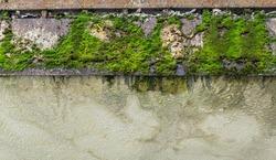The texture of the old wall of the house, covered with moss