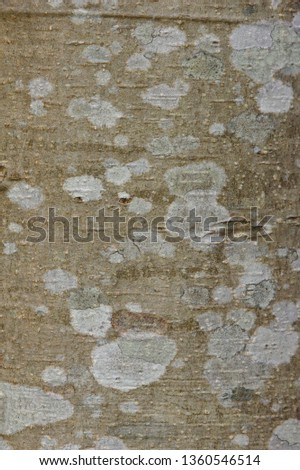 The texture of tree bark up close, with white and grey splotches on it