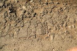 The texture of uneven asphalt.