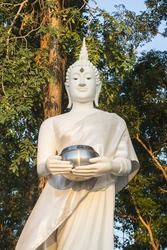 The thai white buddha on the tree back ground