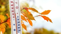 The thermometer near the branch with autumn leaves shows 15 degrees of heat. Warm autumn weather