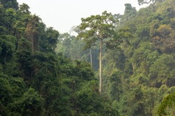 The thick jungles of Chabimura on the steep gorges of the Gomti River in the state of Tripura in Northeast India.