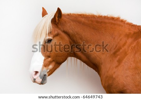 The thoughtful bay quiet horse with a white mane costs at a stone wall and sadly looks in a lens