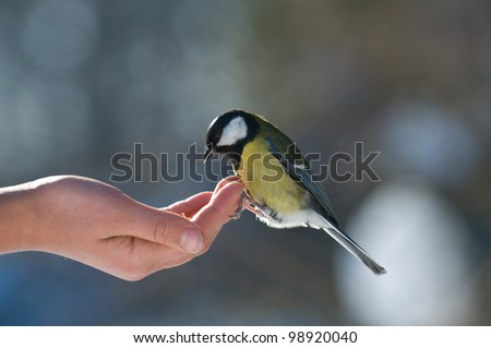 The tit sits on one's hand. People feed the bird.