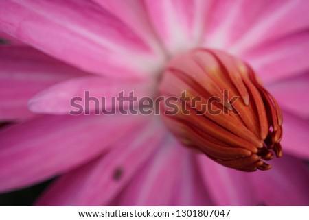The top of lotus flower #1301807047